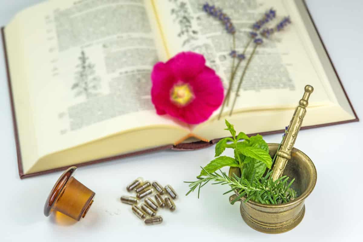 Die Anwendungsgebiete von Heilpflanzen sind weitreichend. Erfahre mehr über Heilpflanzen und Heilkräutern. © hjschneider