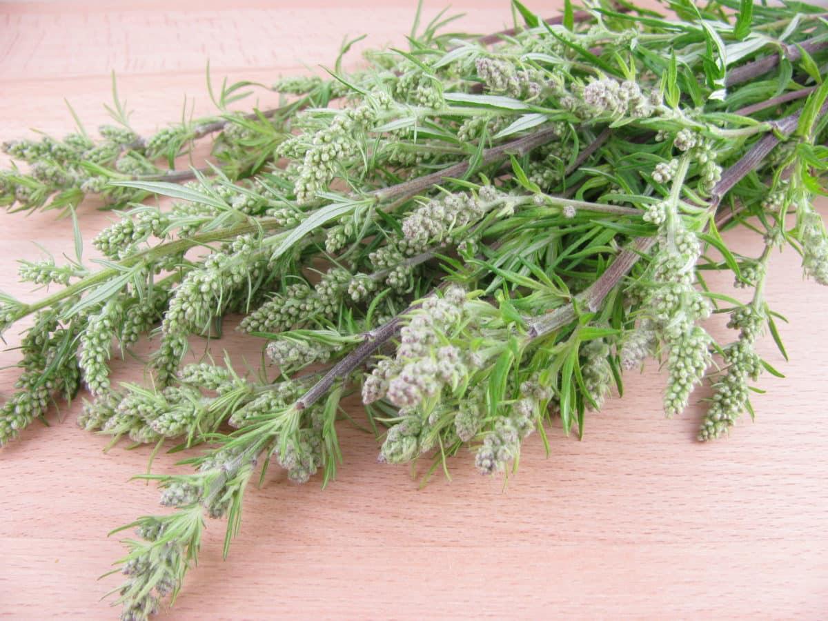 Erfahre mehr über die heilende Wirkung des Beifuß. Die Heilpflanze eignet sich vor allem zur Behandlung von Appetitlosigkeit, Geblsucht und Verdauungsproblemen. © katharinarau