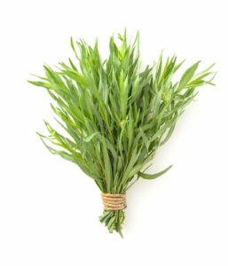 Erfahre mehr über die heilende Wirkung des Estragons. Die Heilpflanze eignet sich vor allem zur Behandlung von Gicht, Husten und Fieber. © Alexander Gogolin