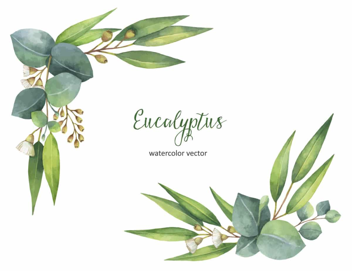 Erfahre mehr über Eucalyptus und die heilende Wirkung bei Krankheiten wie Erkältung, Grippe und Schnupfen. Fotolia © elenamedvedeva