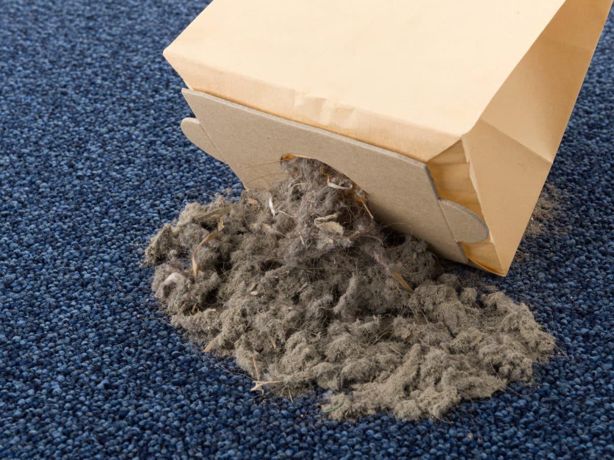 hausmittel gegen milben milben bei katzen behandeln. Black Bedroom Furniture Sets. Home Design Ideas