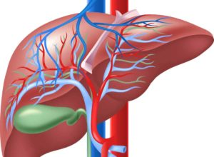Gallenbeschwerden? Mit unseren bewährten Tipps kannst du schnell und unkompliziert mit der Behandlung beginnen. © tigatelu