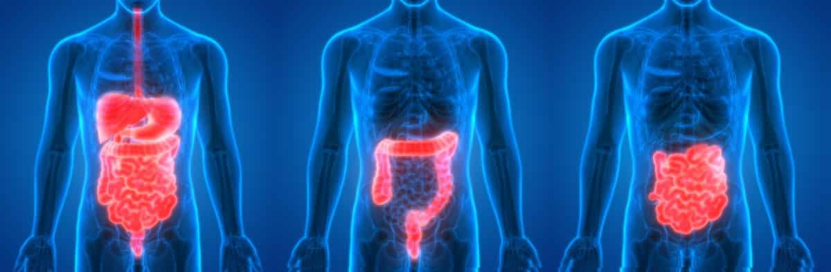 Im Magen und Darm gibt es eine Vielzahl möglicher Beschwerden, was ein breites Spektrum an Mitteln erfordert. Deine Hausapotheke sollte die folgenden Arzneien beinhalten. Fotolia © magicmine