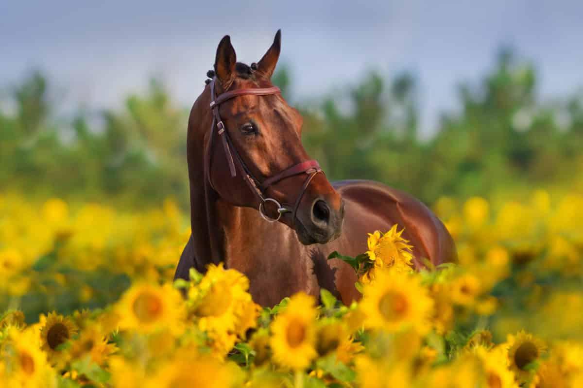 Pferdekastanie in der Natur. Aus der Substanz wird das Globuli zur homöopathischen Behandlung hergestellt. Das Globuli Castor equi wird in der Homöopathie bei Krankheiten wie entzündete Brustwarzen, Steißbein-, sowie Schmerzen im Schienbein eingesetzt. Fotolia © callipso88