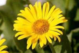 Heilpflanzen zur gesunden Krankheitsbehandlung