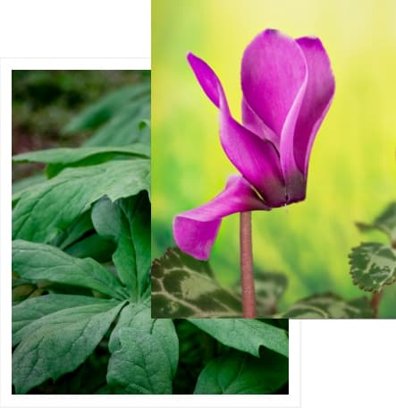 Wir zeigen dir die heilende Wirkung von Arzeneipflanzen und wie du Sie zur Behandlung von Krankheiten einsetzen kannst.